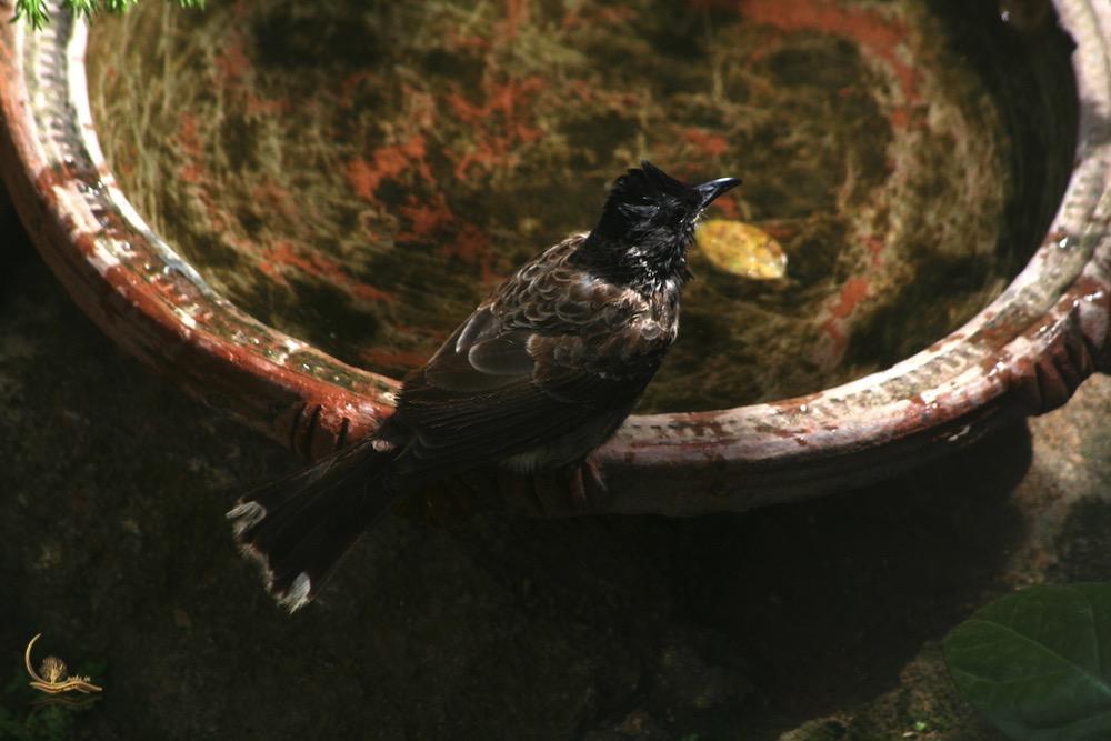 Raksin birdbath 1