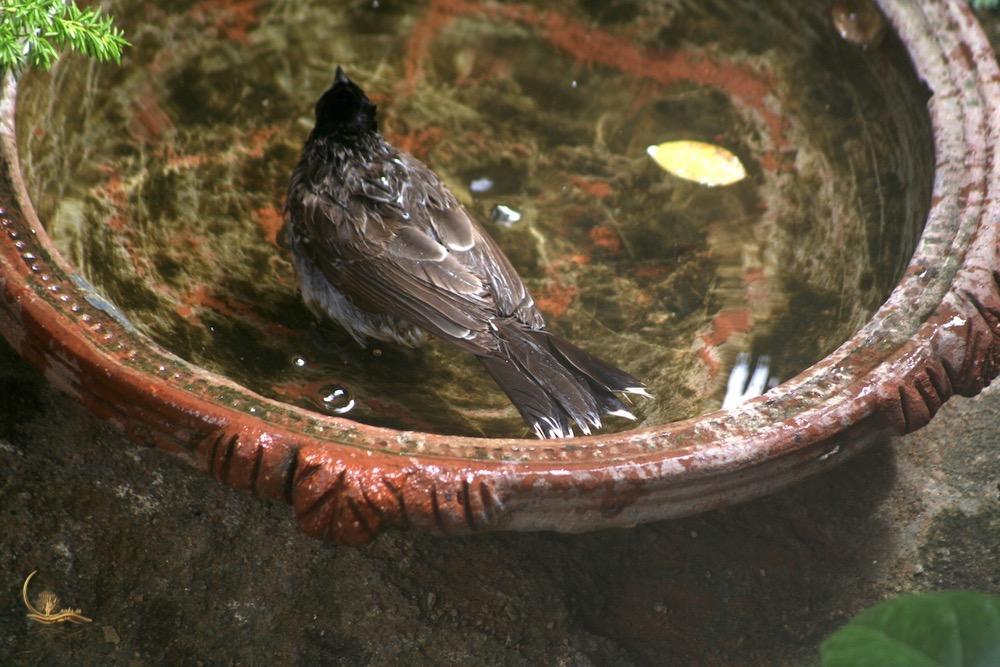Raksin birdbath 3