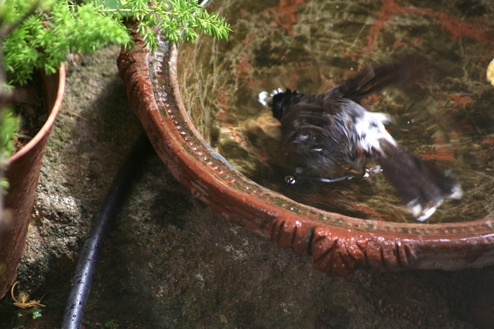Raksin birdbath 4