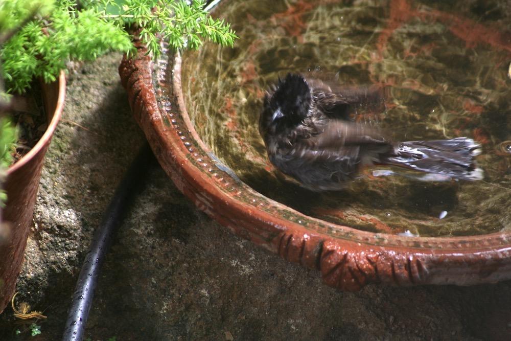 Raksin birdbath 5