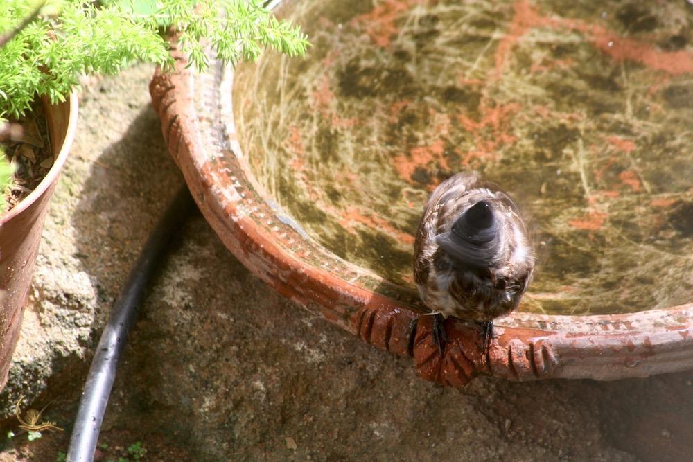 Raksin birdbath 6